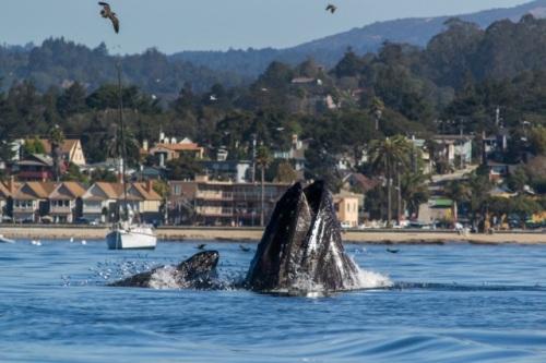 sharron whale 1
